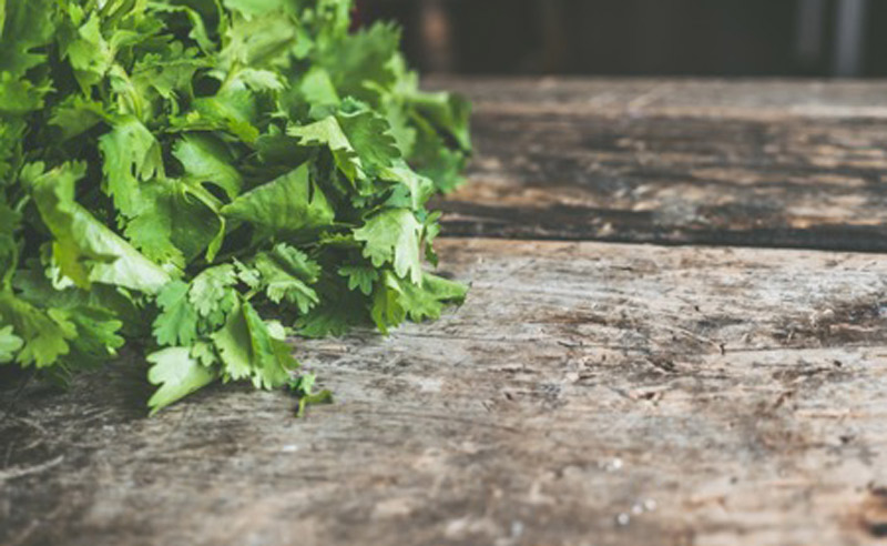 Image of coriander leaves