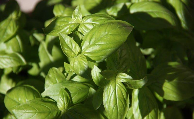 Image of fresh basil at Food Sorcery, Didsbury